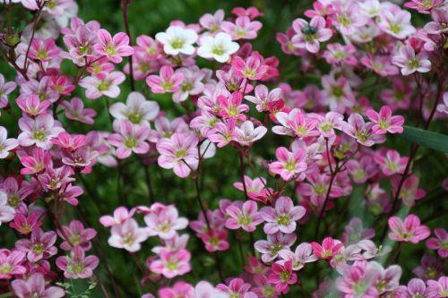 Gartenimpressionen 3