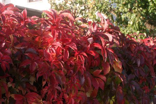Gartenimpressionen 4