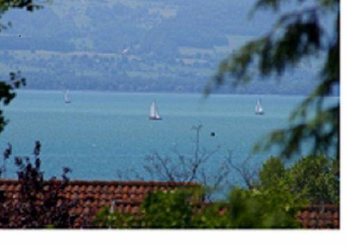 sommerliches Segelvergnügen a.d. See