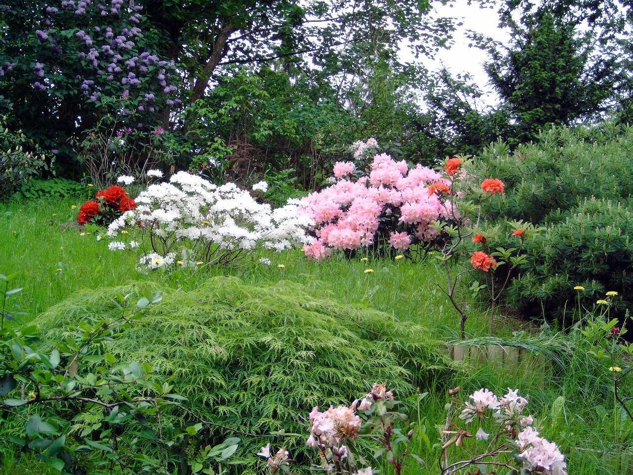Rhododendren-Garten