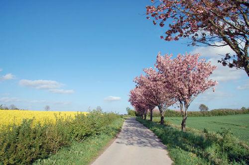 Umgebung von Ferienhof Schwennesen - Ferienwohnung Sonnenblume