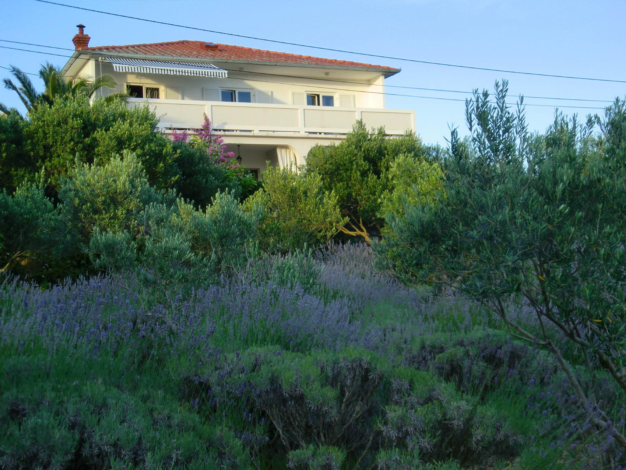 Die Villa Lavanda mitte im Garten