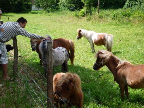 Ponyzucht in Jabel
