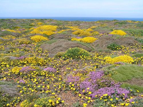 Frühling an der Westküste