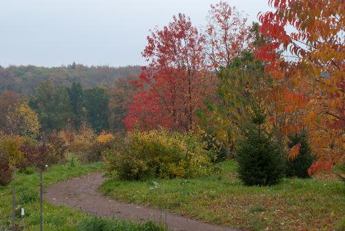 Im Forstbotanischen Garten Tharandt