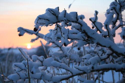Schnee satt an der Maade