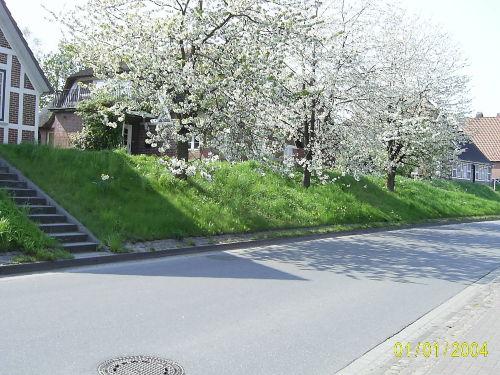 Kirschbl�te im Alten-Land