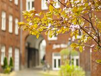 Burghof Apartment Flensburg in Flensburg - kleines Detailbild