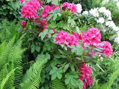 Garten in Blüte