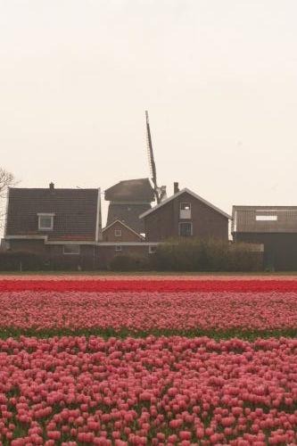 """das """"Blumenmeer"""" von Nordholland"""