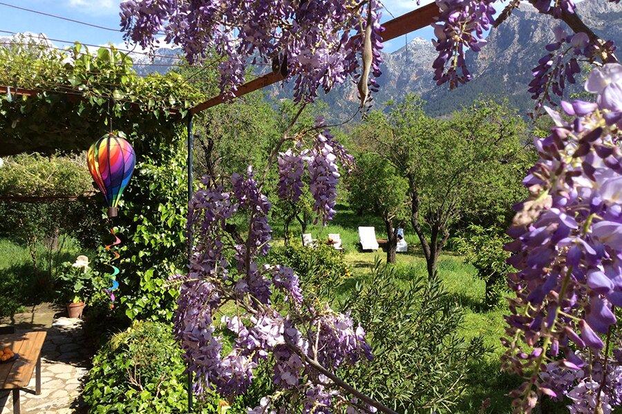 Der Garten im Frühjahr/Mandelblüte