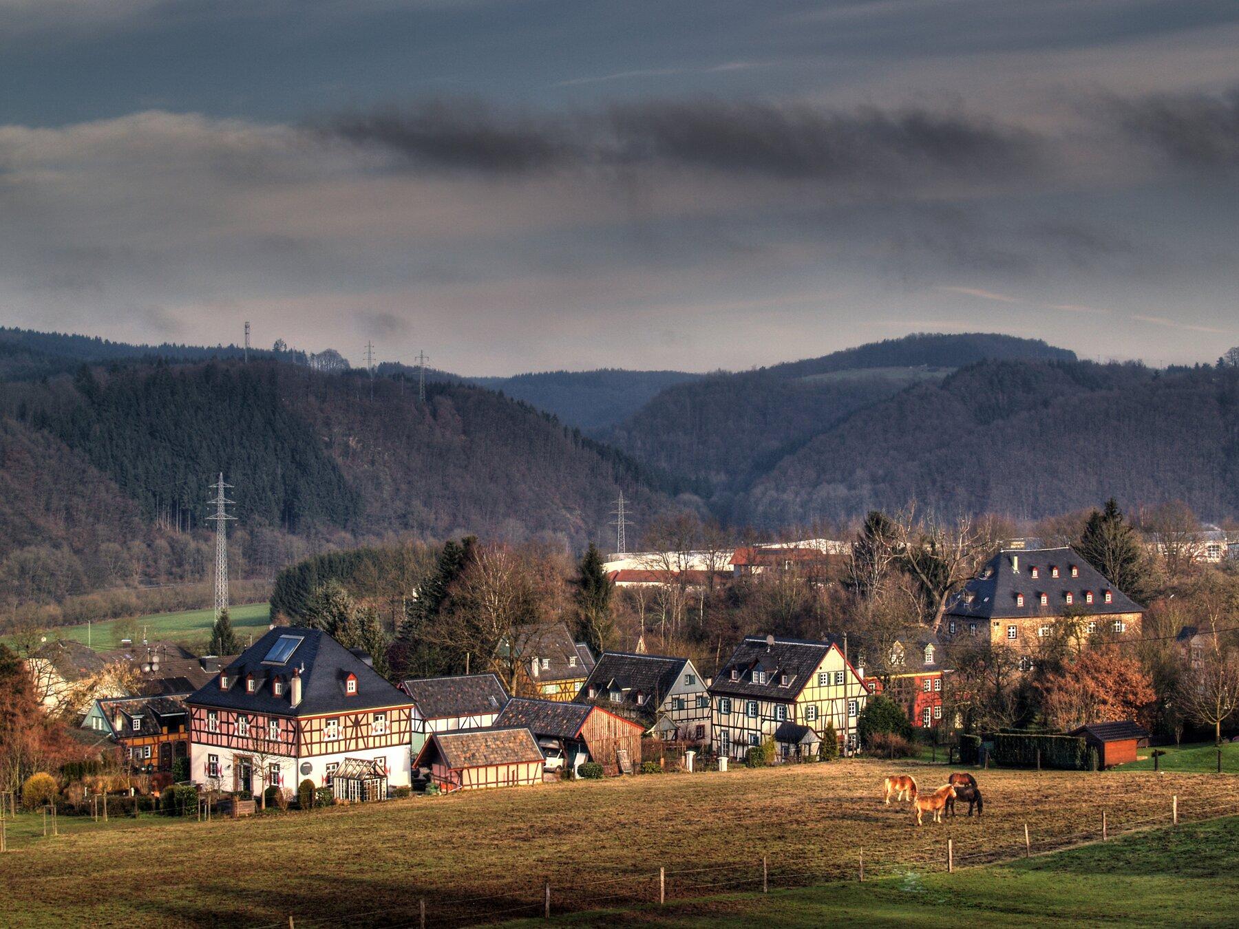 Blick vom Waldrand (Foto: F. Muckle)