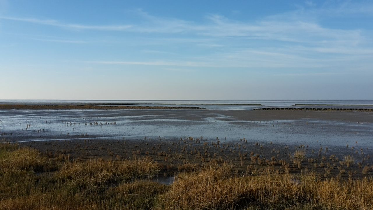 Deich und Nordsee- in 200 m Entfernung