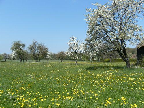 Unsere Wiese im Frühling