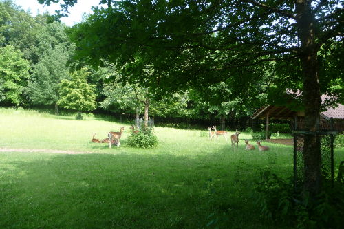 Wildpark in Schwarzach 4 km