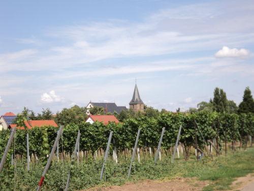 Herbststimmung in Kirrweiler