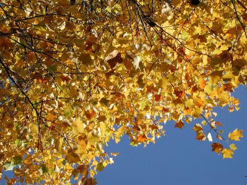 Herbst im nahen Gehölzgarten