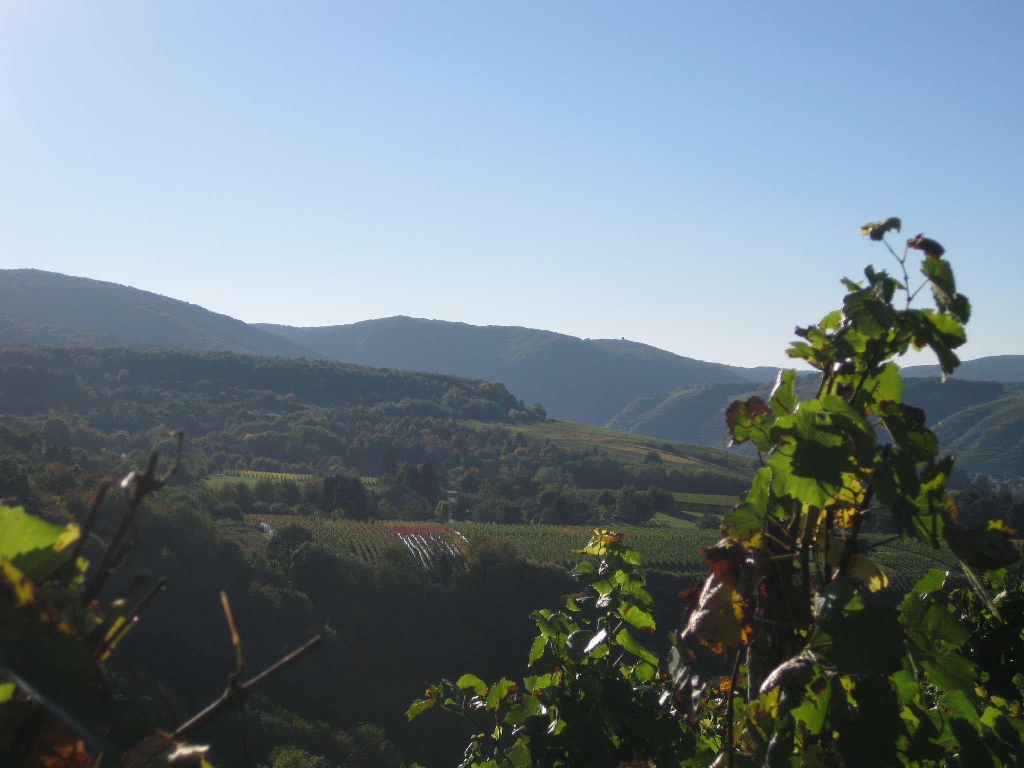 Aussicht vom Bachemer Berg