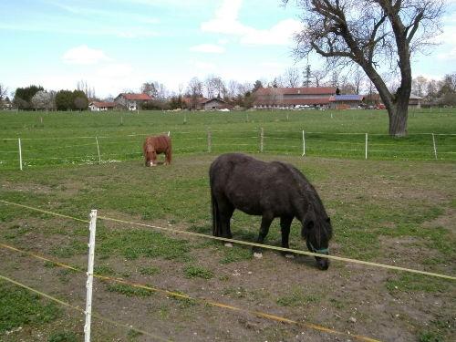 Kostenl. Ponyreiten auf der Cora & Cindy
