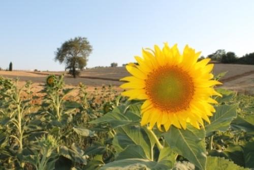 Sommer auf Saletta