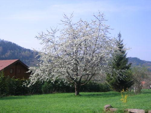 Große Wiese mit Baumbestand um das Haus