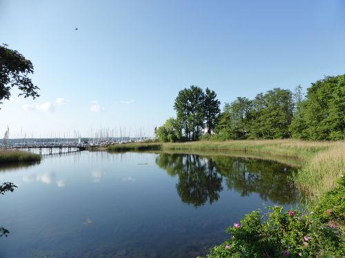 Möwe am Flensburger Hafen