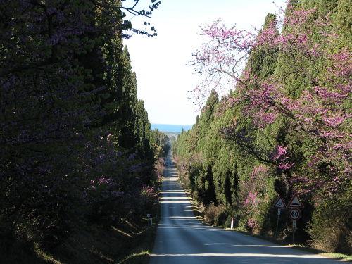 berühmte Zypressenalle im Dorfteil Bolgh