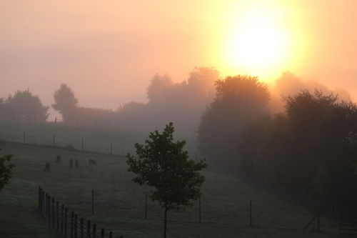 Sonnenaufgang an der Alpakaweide