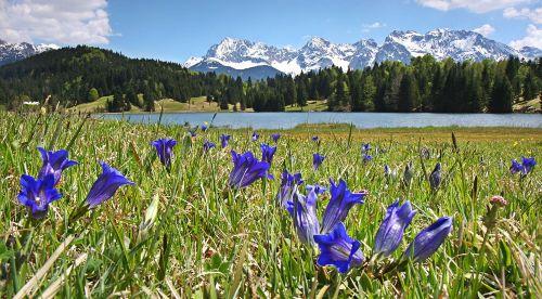 Geroldsee mit Enzian u. Karwendekgebirge