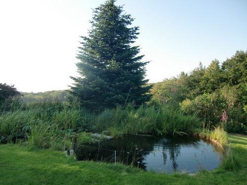 Parkähnliches Grundstück mit Teich