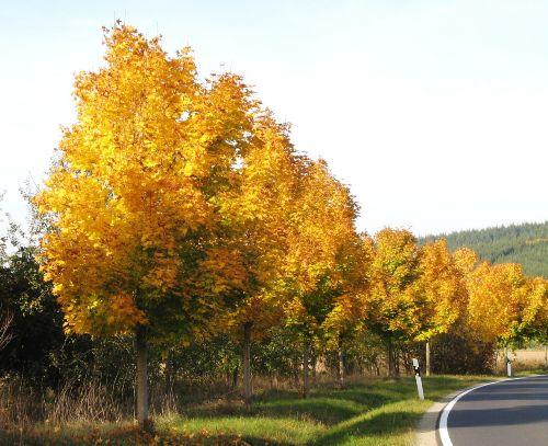 Goldener Oktober in der Rhön