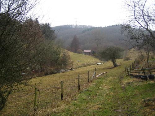 Bach und Weide hinterm Haus
