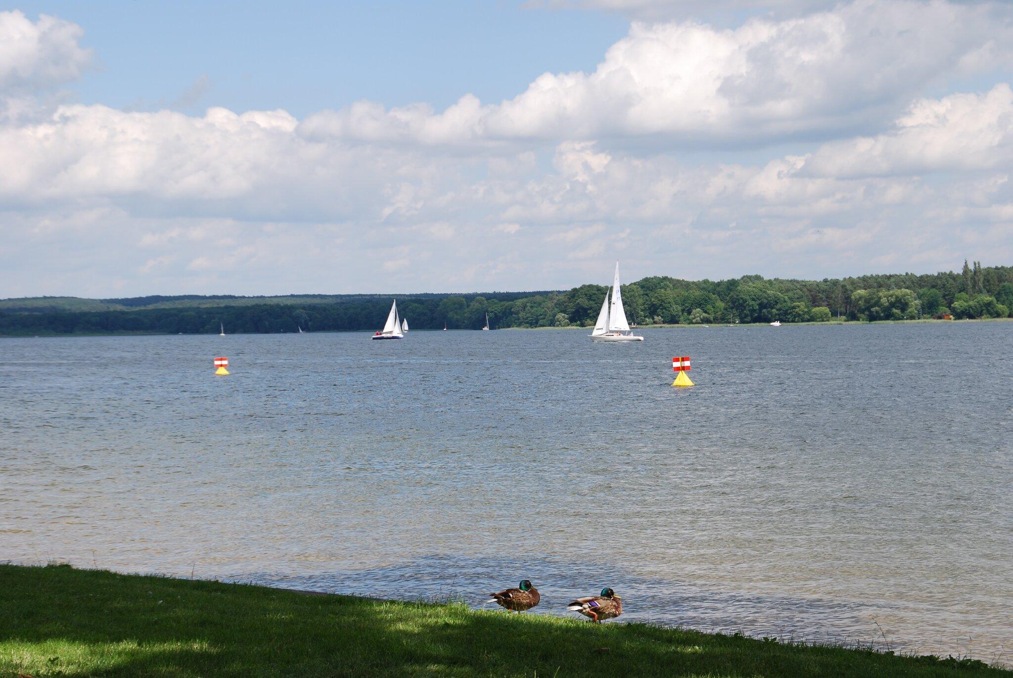 Der See im Sommer
