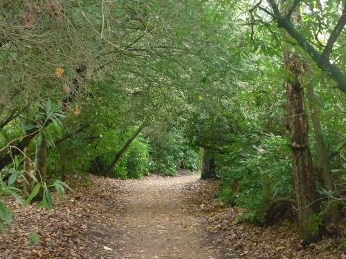 Wald de Mantelinge