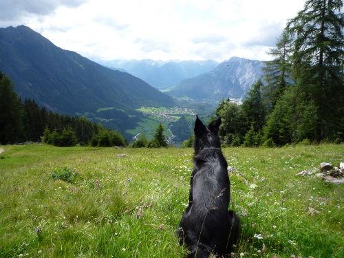 Auch Hunde wandern gerne...
