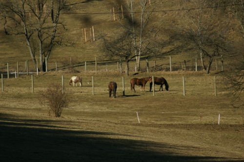 Pferde von Mundelfingen