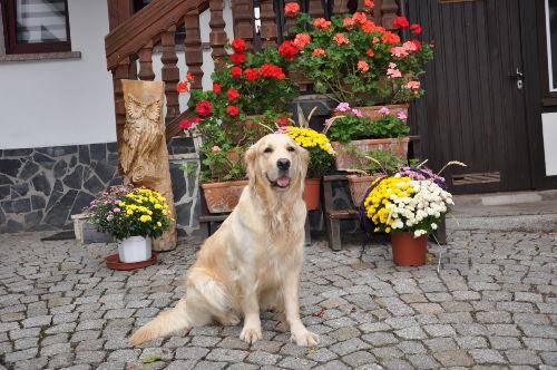 Unser liebevoller Hund