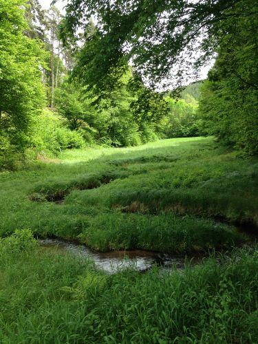 Rad- u. Wanderwege im Wald um Rieneck