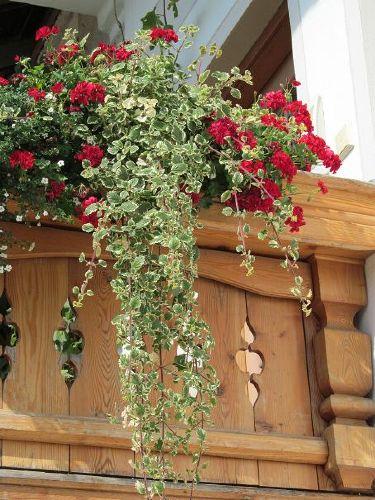Blumen - für uns selbstverständlich