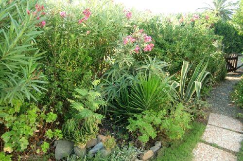 Oleander, Palmen und Agaven vor dem Haus
