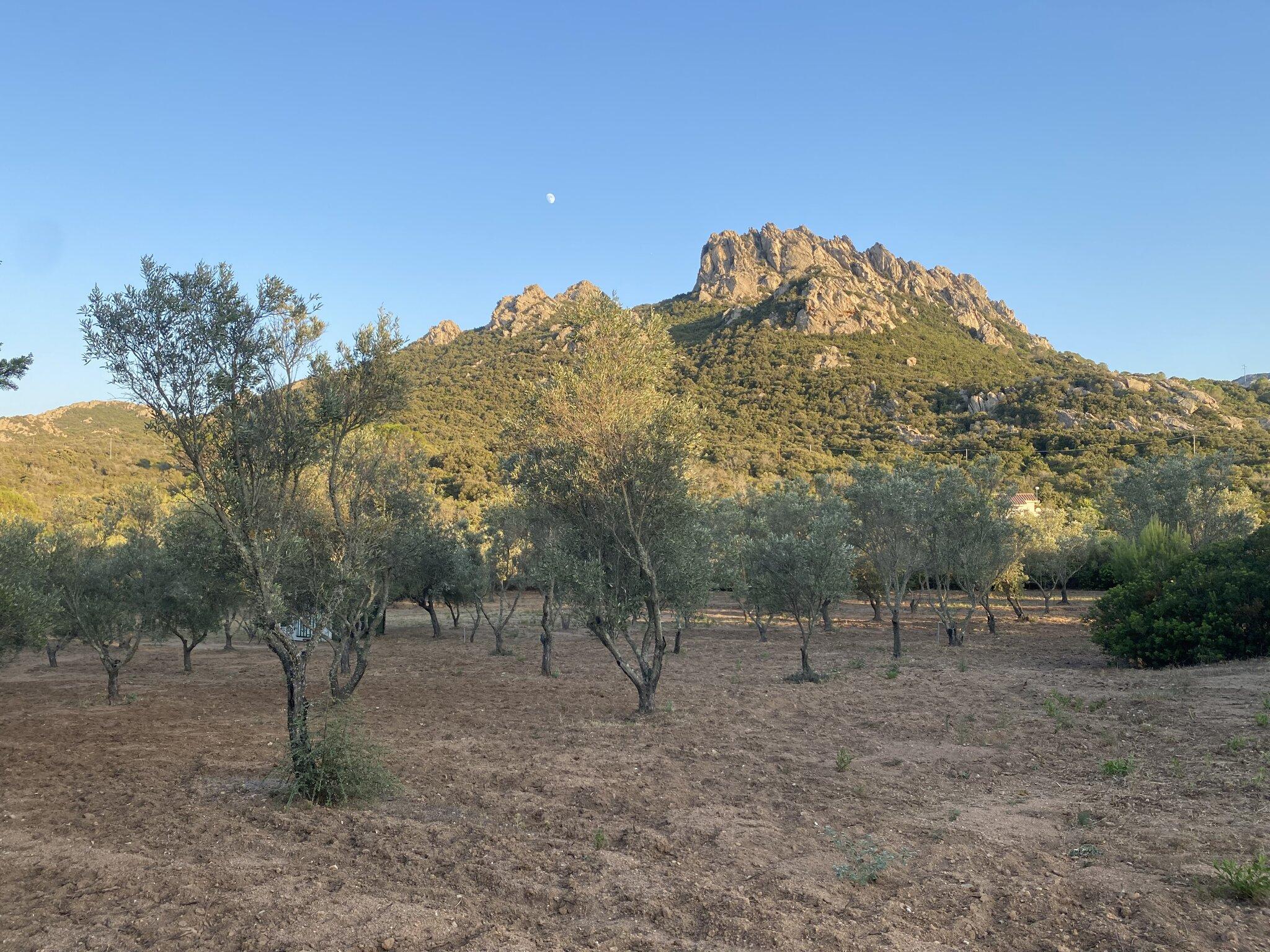 Alte Dorfkirche von San Pantaleo