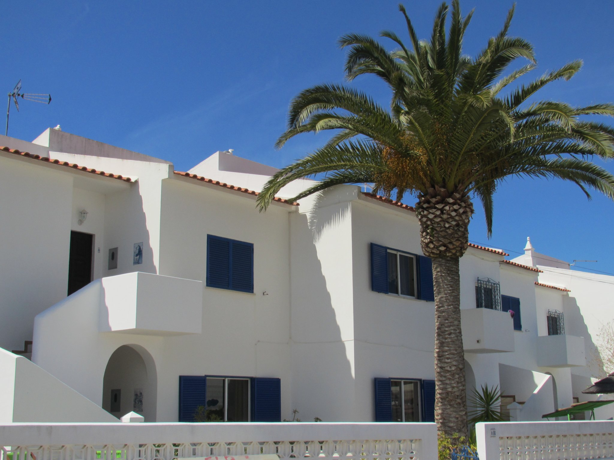 blau/weiße Häuser mit Palmen
