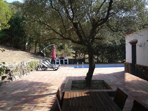 Terrasse mit Olivenbaum und Pool