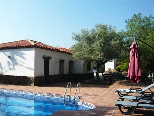 Terrasse mit Olivenbaum Pool