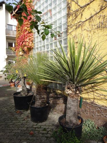 Mediterrane Pflanzen im Hausbereich