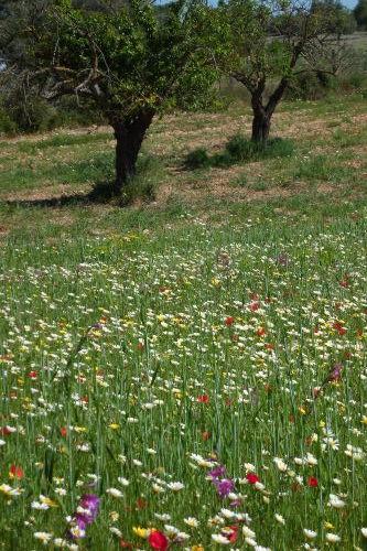 Blumenwiese auf Fahrradtour
