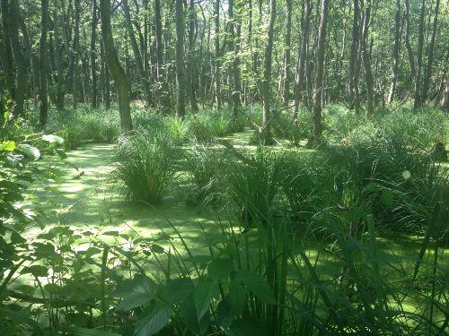 Im Darßwald bei Prerow