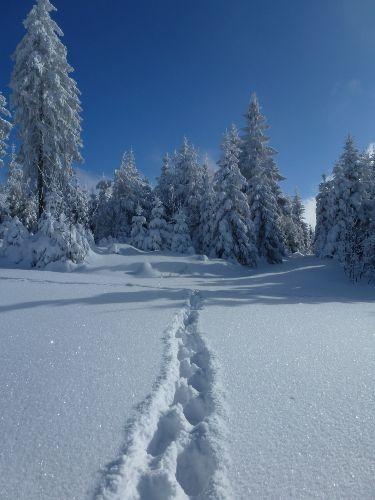 Schneeschuhwandern zum Glaswaldsee