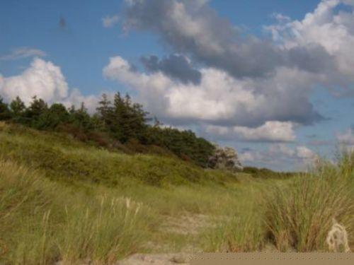 Dünen am Strand von Utersum