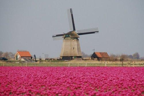 Im Fr�hjahr farbigen Fell Blumenfeldern